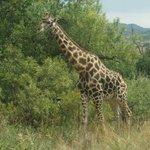 Pilanesberg Game Drive