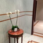 Phalaenopsis in abundance