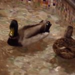 Peabody Memphis Drake & Hen