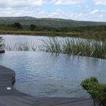 Pool & Waterhole