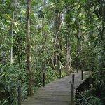 Jungle near Boardwalk at Abai