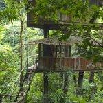 Mis Ojos treehouse.