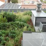 green roof, nice to see
