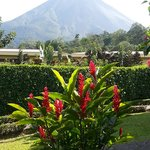 volcano with exotic flowers in foreground