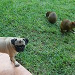 zahme und wilde Haustiere