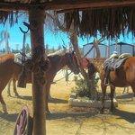 Trail Ponies