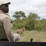 Frans and lion on game drive