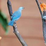 Birds around restaurant