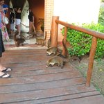 Wildlife by the buffet area