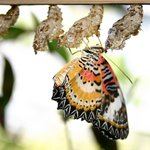 Photo provided by Phuket Butterfly & Insect World