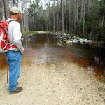 Longleaf trail can only be traversed by wading.