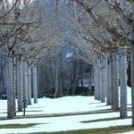 Invierno - árboles junto al bungalow