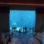 Parte do imenso aquário que tem no hotel