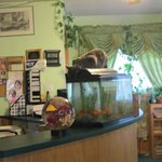 Front desk & dining area with cat drinking out of fish tank