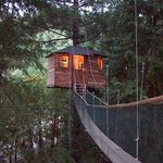 Forestree Treehouse