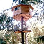 Majestree Treehouse