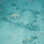 Heart of coral on ocean floor!