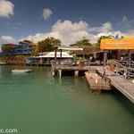 Dodgy Dock Restaurant and Scuba Diving Center