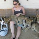 lion cubs everywhere!