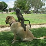 a dog and a baboon...
