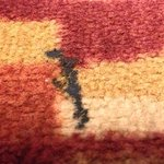 Siff auf dem Teppich