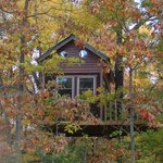 Maple Oak tree house in fall