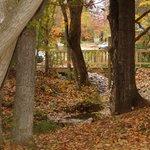 Below Maple Oak tree house
