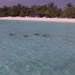 Eagle Rays just off the beach