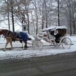 Carriage ride nearby