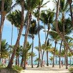 gorgeous palms