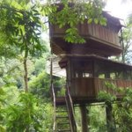 The two story treehouse