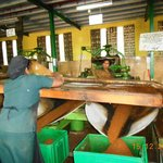 Working Tea Factory En-route