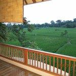 view ke sawah