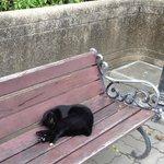 ベンチャシリ公園の黒ねこ
