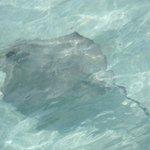 Stingray @ Iguana Island