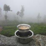 Sampling tea