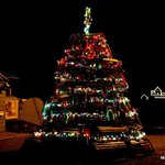 Lobster Trap Tree with the Lighthouse in the background
