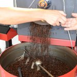 Coffee beans coming out of Hula Daddy's roster