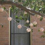 Japanese Lanterns-outside