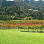 The Vineyard in Autumn