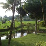 grounds of resort before the rice terraces