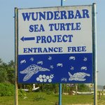 As it says --sea turtle project !