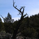 Juniper Trees and Basalt