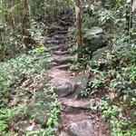 along rain forest trail