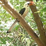 Friendly hornbill looking at girlfriend in the shop