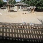 Duck Quarters (doha zoo, 2011)