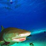 Shark Dive
