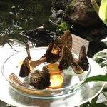 Schmetterlings (Butterfly) Garden