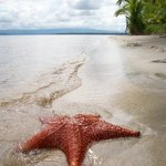 Visit Starfish Beach