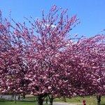 Prospect Park Foto